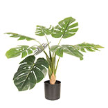 Decoratie plant Monstera Deliciosa