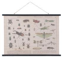 Wandkaart insecten