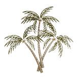 Wanddecoratie palmbomen