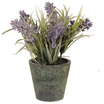Decoration lavender in pot