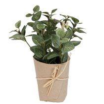 Decoration plant in pot