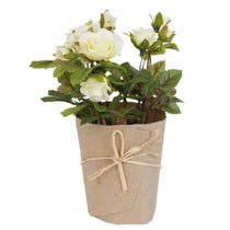 Decoration rose in pot