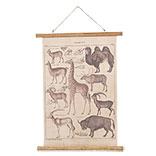 Wandkaart dieren
