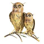 Decoratie uilen